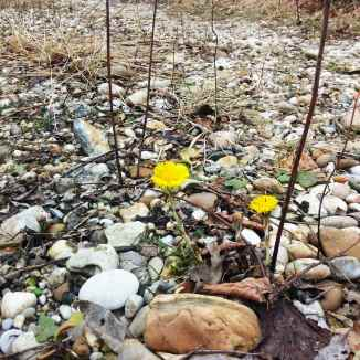 Frühlingserwachen, Wienerwald im Februar © Lina Bibaric