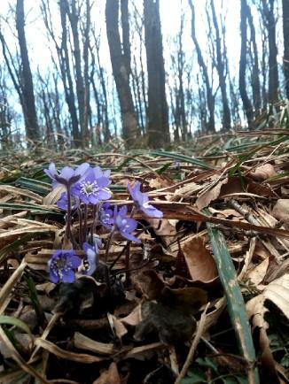Frühlingserwachen II © Lina Bibaric