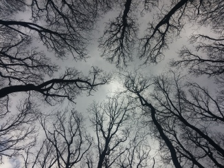 BatikHimmel, Wienerwald © Lina Bibaric