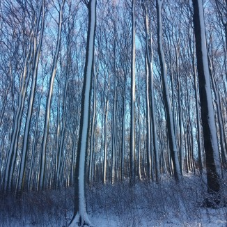 IltisBäume, Wienerwald © Lina Bibaric